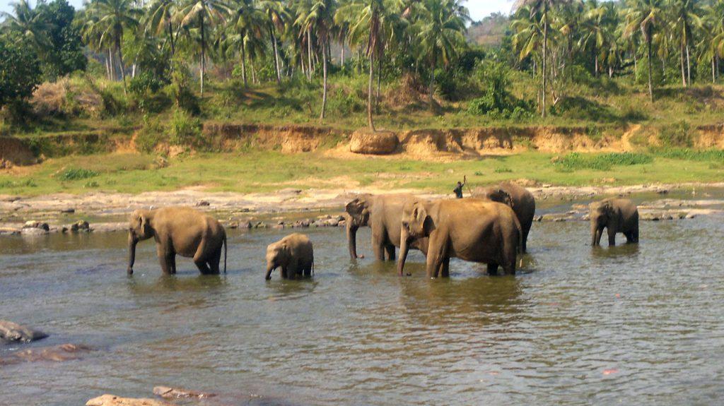 elefanti immersi nella natura