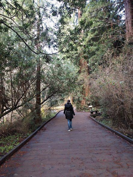 oasi di verde tra le Sequoie giganti