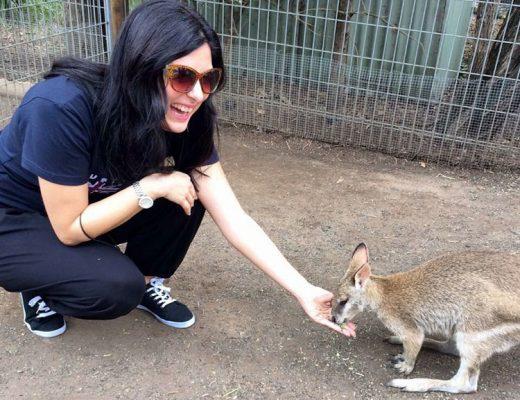 l'amicizia con un canguro
