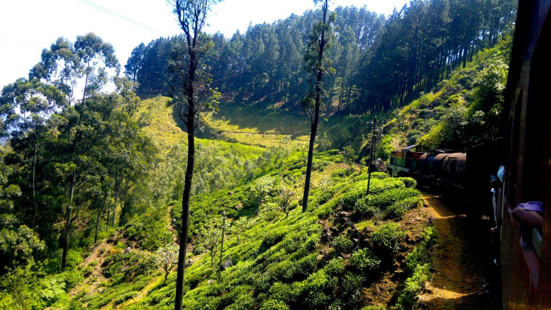 attraverso la natura dello Sri Lanka