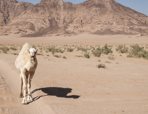 Deserto Wadi Rum Giordania
