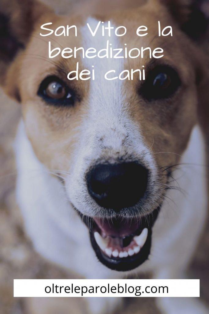 La benedizione dei cani di San Vito