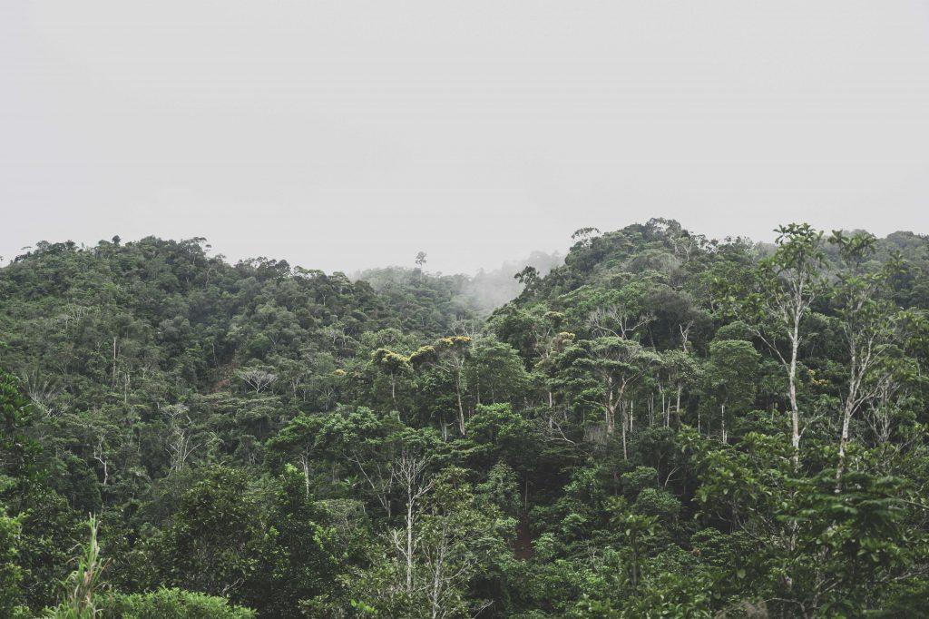 verdi alberi della foresta Amazzonica