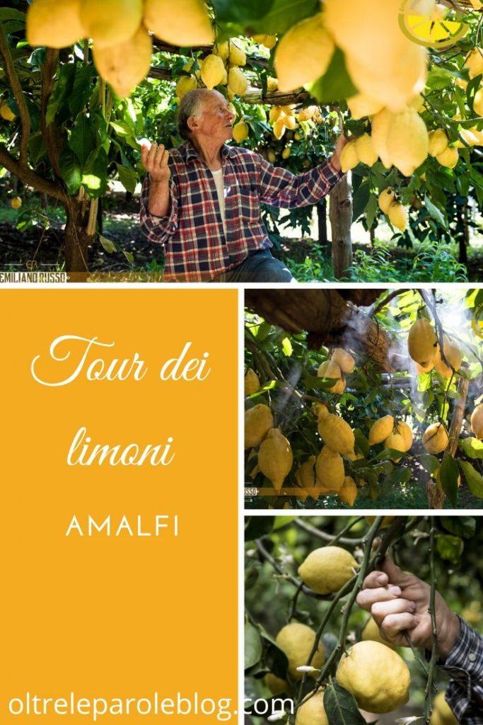 Lemon experience tour dei limoni