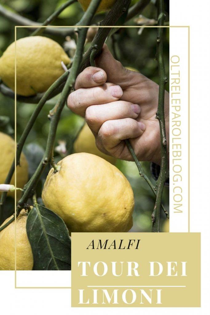 Limoni Amalfi 2 tour dei limoni