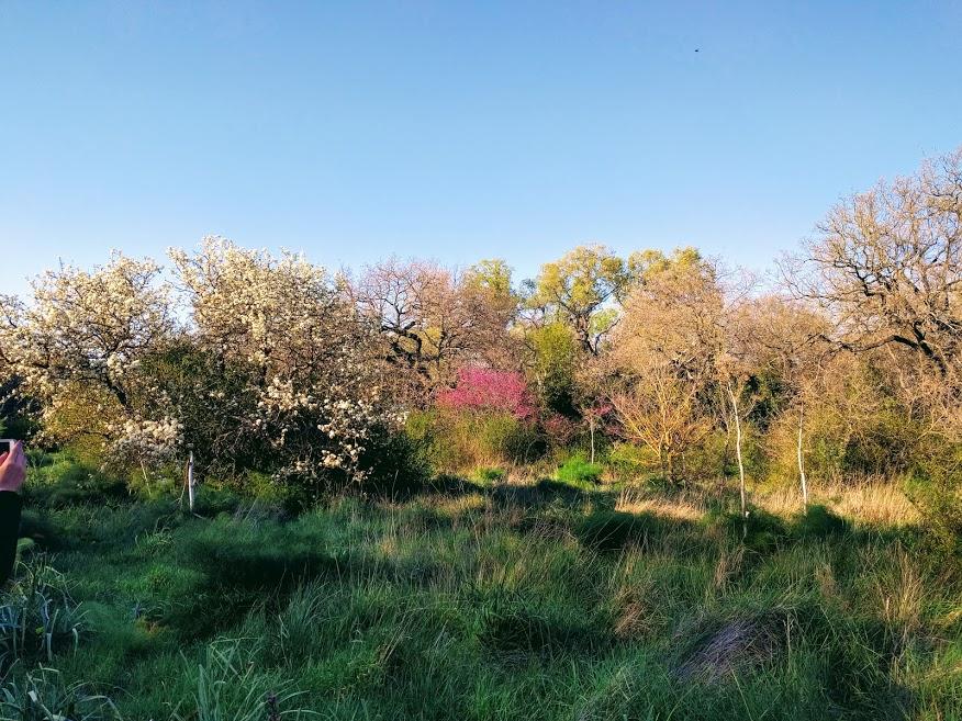 Bosco dell'Incoronata - escursione nella natura vicino Foggia