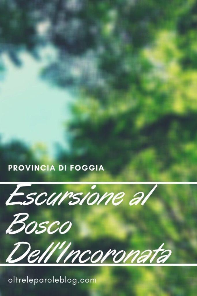 Natura in provincia di Foggia bosco dell'incoronata