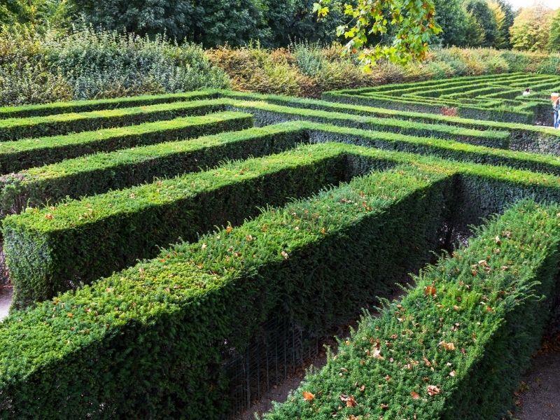 Il labirinto del castello